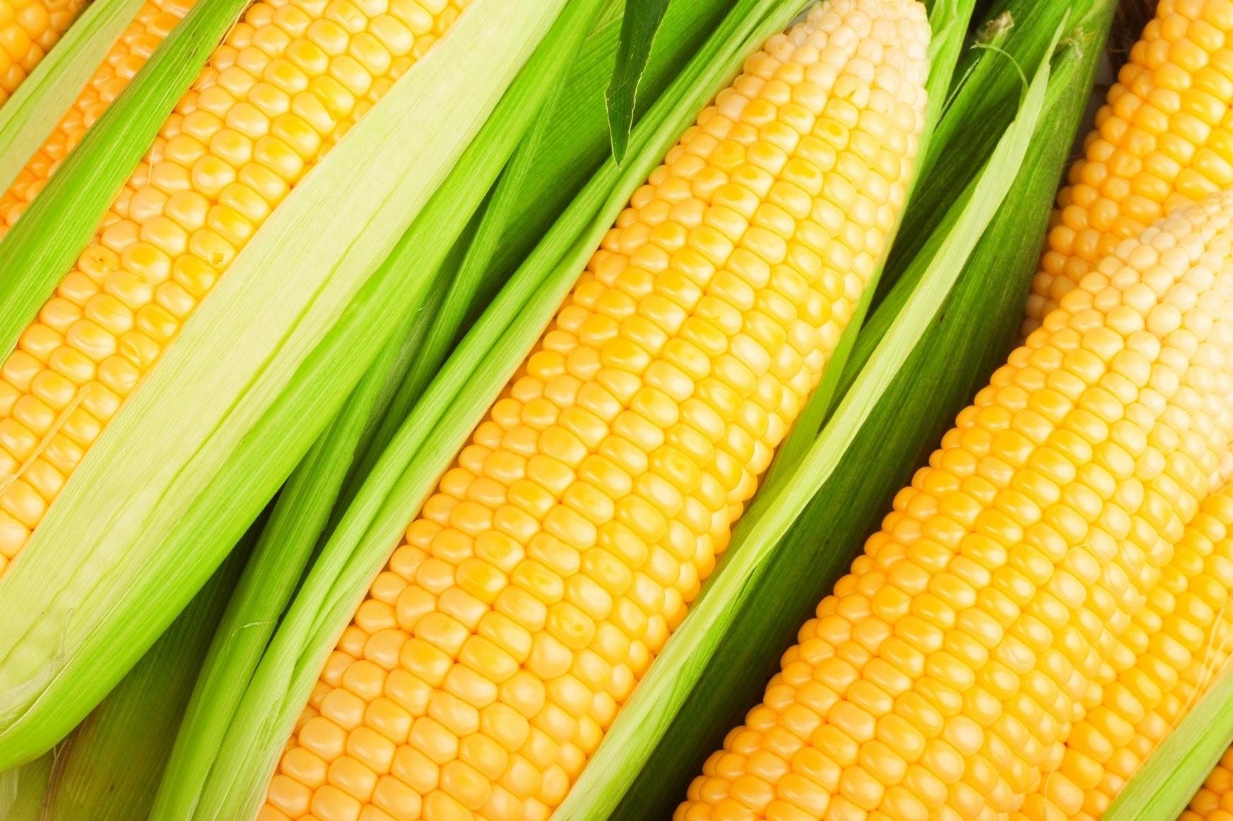 Прогноз цены на кукурузу в 2019 году в Украине - цена кукурузы